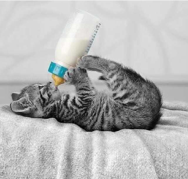 Bạn có dám chắc rằng mình đã thực sự hiểu về việc uống sữa không? - Ảnh 5.