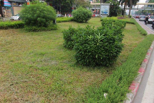 Một số khu cỏ đã được cắt tỉa gọn gàng
