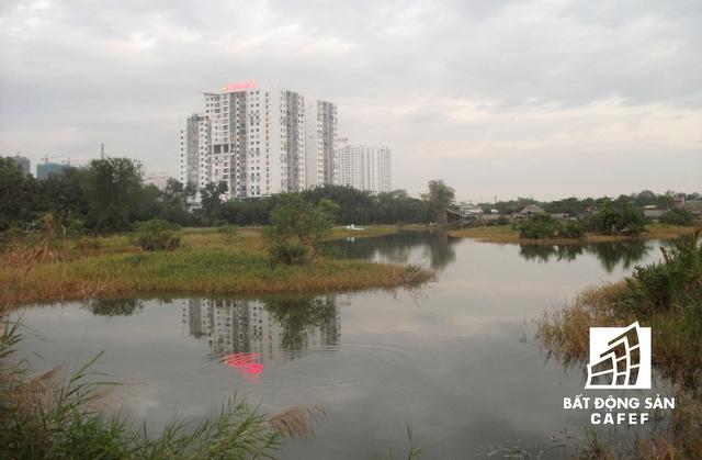 Bốn bề dự án đều cỏ hoang, nhiều hố sâu đọng nước. Trong khi người dân sinh sống tạm bợ ở đây đang làm ô nhiễm cả khu vực bởi xả thải thẳng ra đất dự án.