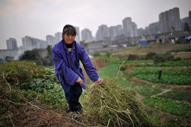 Và đối với hàng triệu nông dân sống ở ven thành phố, họ đang cảm thấy không chắc chắn về tương lai.