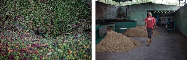 Một xưởng chế biến cà phê ở Chabasquén.