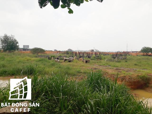 Phần lớn đất trong khuôn viên dự án là ao tù và cỏ dại vẫn chưa được san lắp mặt bằng.