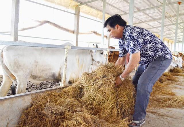 Nhờ kết hợp chăn nuôi với trồng trọt mà mỗi năm, ông Đức đút túi 15 tỷ đồng tiền lãi