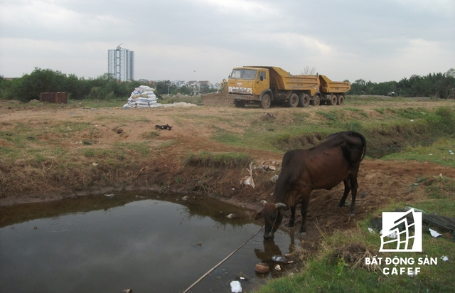 Dự án chưa có dấu hiệu triển khai, hiện vẫn là nơi chăn thả bò của người dân.