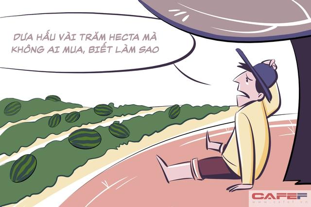 Ngày nảy ngày nay… có anh nông dân kia, trồng dưa được mùa mà không ai mua, ngồi khóc huhu.