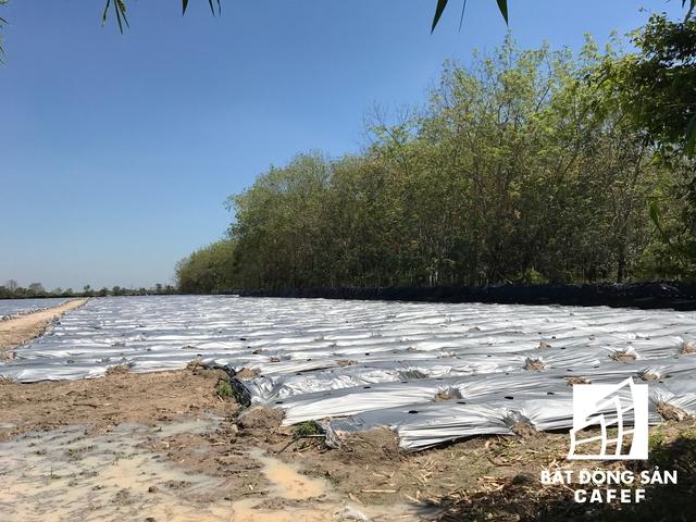 Khu vực chúa đảo Tuần Châu đầu tư siêu dự án đa phần là đất nông nghiệp, rừng cao su