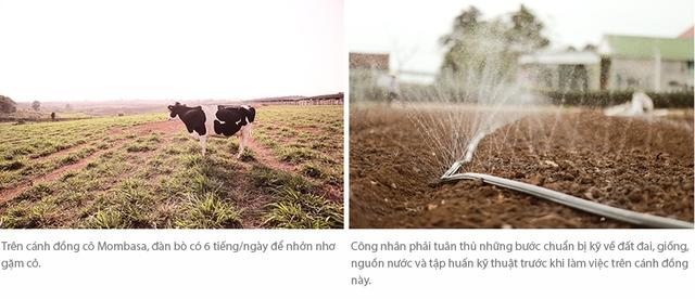 Cuộc sống như mơ của những cô bò hạnh phúc trong trang trại TH True Milk - Ảnh 11.