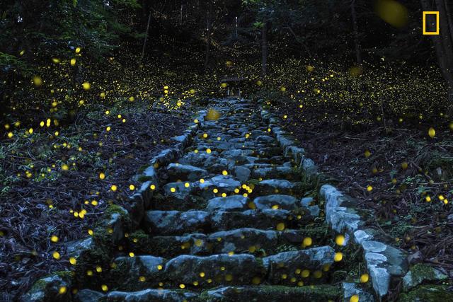 """""""Rừng tiên"""", bức ảnh của Yutaka Takafuji, cũng giành giải khuyến khích."""