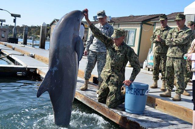 SPAWAR được Hải quân Mỹ bắt đầu với Notty, một con cái thuộc loài cá heo Thái Bình Dương khoang trắng đen. Từ năm 2002, kinh phí cho SPAWAR là 14 triệu USD/năm và được duy trì tới năm 2020. Ngoài nhiệm vụ bảo vệ, năm 2003, cá heo được Mỹ sử dụng để dọn mìn trong cuộc chiến tranh với Iraq.