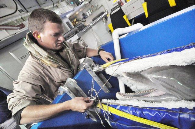 Cá heo biệt kích không chỉ tham gia các hoạt động chiến tranh. Năm 2009, Mỹ đưa cá heo tới New Caledonia để dò mìn còn sót lại từ Thế chiến II nhằm phục vụ mục đích nhân đạo.