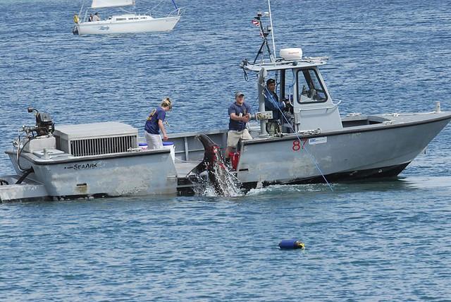 Ngoài nhiệm vụ bảo vệ, cá heo còn tỏ ra hiệu quả trong việc tìm kiếm đồ vật thất lạc dưới nước.
