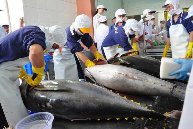 Cá ngừ là một trong những mặt hàng hải sản chủ lực xuất khẩu sang EU