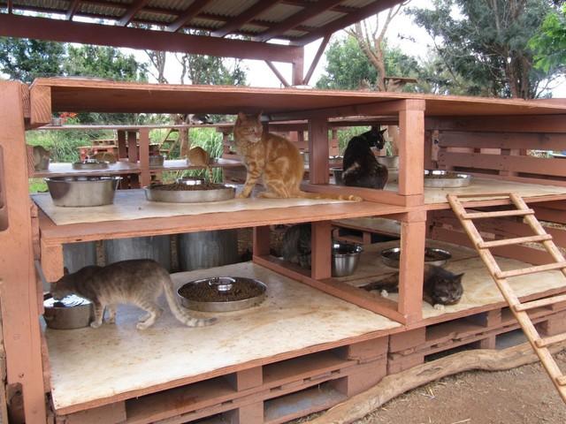 """""""Nhà"""" của loài mèo hoang tại Trung tâm Cứu hộ Động vật Lanai."""
