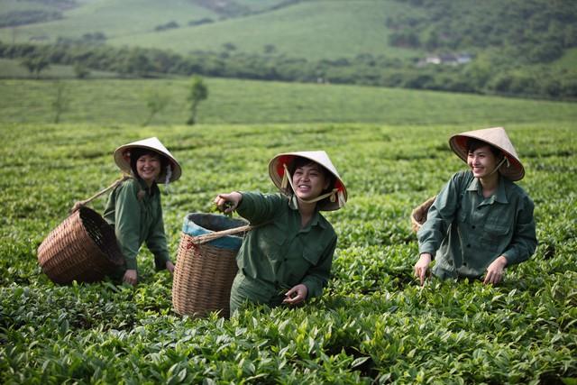"""Các vùng chè lớn của Vinatea đều đạt tiêu chuẩn chứng chỉ RA (""""Rainforest Alliance"""") về phát triển nông nghiệp bền vững"""