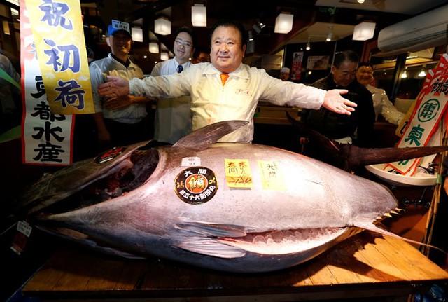 Con cá được đánh bắt tại bờ biển thành phố Oma, phía bắc Nhật Bản. Người mua nó là ông Kiyoshi Kimura, chủ chuỗi nhà hàng sushi Zanmai nổi tiếng. Ảnh: Reuters.