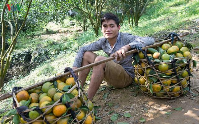 """Chủ trương của Tuyên Quang là không phát triển """"nóng"""" về diện tích mà tập trung nâng cao chất lượng và giá trị sản phẩm cam sành."""