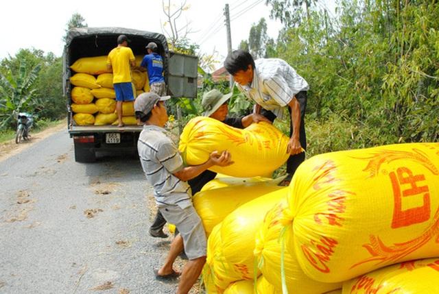 Khi giá gạo thế giới có xu hướng giảm thì trong nước lại tăng Ảnh: NGỌC TRINH