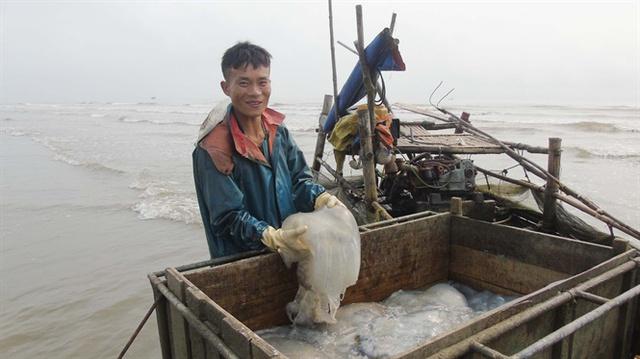 Ngư dân khai thác sứa trở về bến, nhập cho cơ sở chế biến