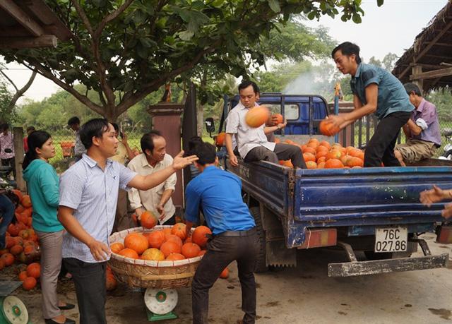 Liên Đoàn lao động huyện Bình Sơn phối hợp với các phòng, ban trong huyện thu mua bí đỏ cho nông dân xã Bình Mỹ