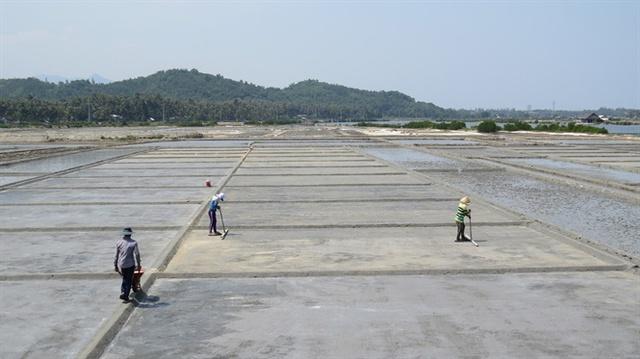 Vùng muối Tuyết Diêm, xã Xuân Bình rộng 140ha, vụ mới năm nay vào vụ trễ hơn