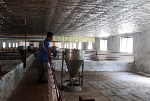 Một hộ chăn nuôi heo ở Đồng Nai bỏ trống trang trại vì thua lỗ. Ảnh: Ngọc An.