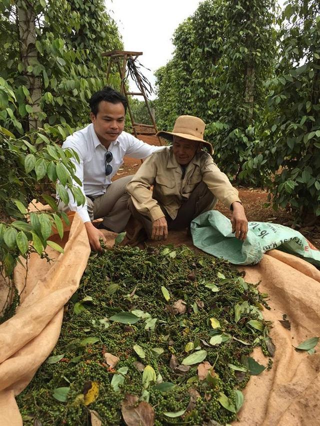 Nhiều nông dân đóng bao cất trữ tiêu chờ tăng giá