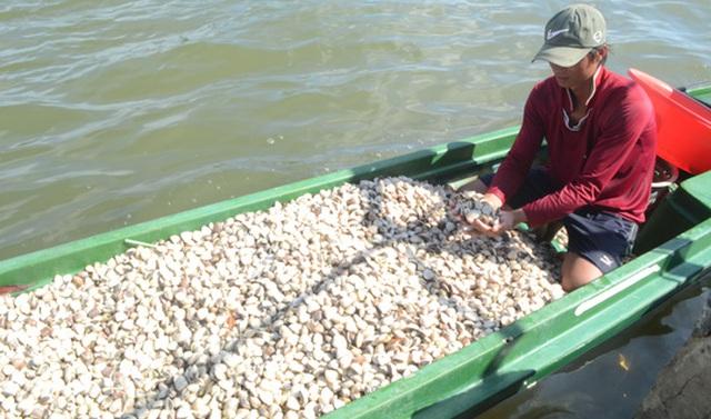 Nhiều HTX và hộ dân nuôi nghêu ở xã Thuận Yên tiếc vì nghêu chết bất thường khi vừa bước vào mùa thu hoạch.