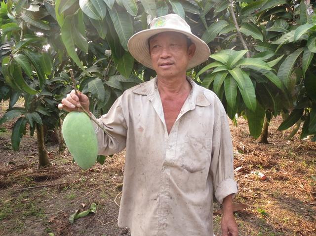 Ông Phạm Minh Tâm giới thiệu cây xoài Đài Loan