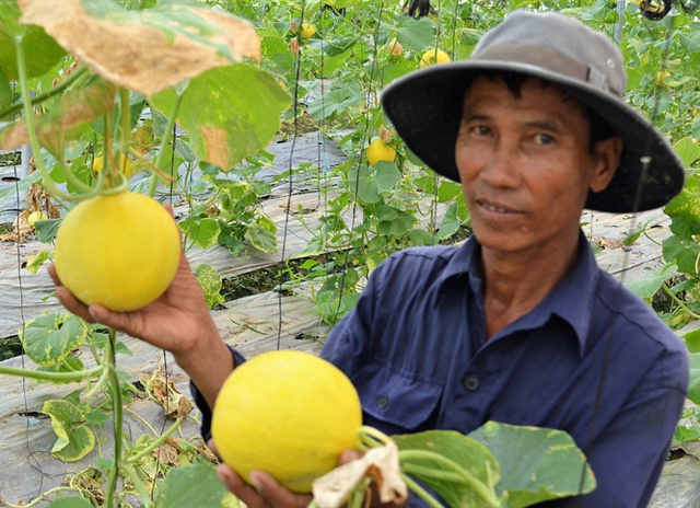 Năng suất trái cây năm nay không đạt như kỳ vọng