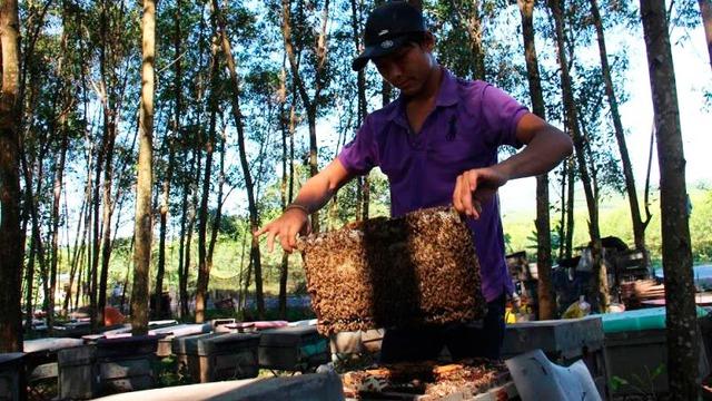Những người thuê vườn nuôi ong tại xã Kỳ Tây (Kỳ Anh, Hà Tĩnh) đang bị xã thu thêm khoản lệ phí nuôi ong