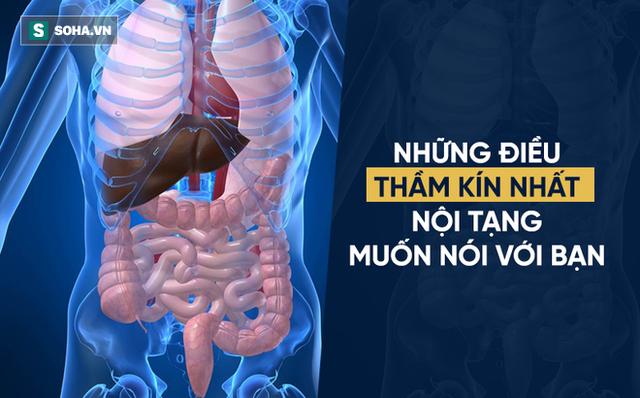 Nội tạng khỏe mới đảm bảo sức khỏe tốt, nội tạng yếu là cơ thể sẽ sinh bệnh (Ảnh minh họa)