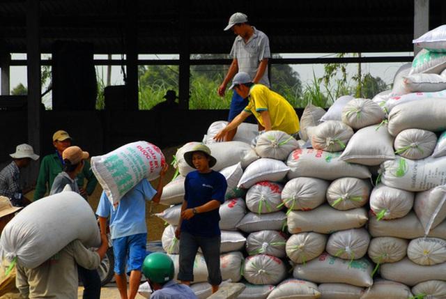 Xuất khẩu gạo là lĩnh vực còn nhiều quy định gây khó khăn cho doanh nghiệp Ảnh: Ngọc Trinh
