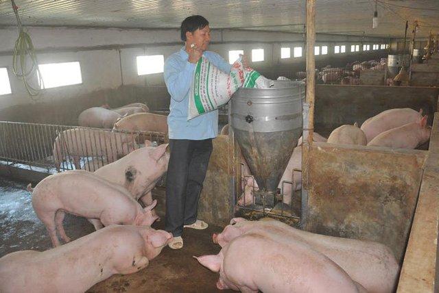 Người chăn nuôi bắt đầu hòa vốn khi giá thịt lợn tăng mạnh