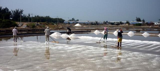 Giá muối ở Ninh Thuận tăng cao nhưng diêm dân không có để bán