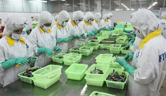 Chế biến tôm xuất khẩu ở Sóc Trăng (Ảnh: ST)