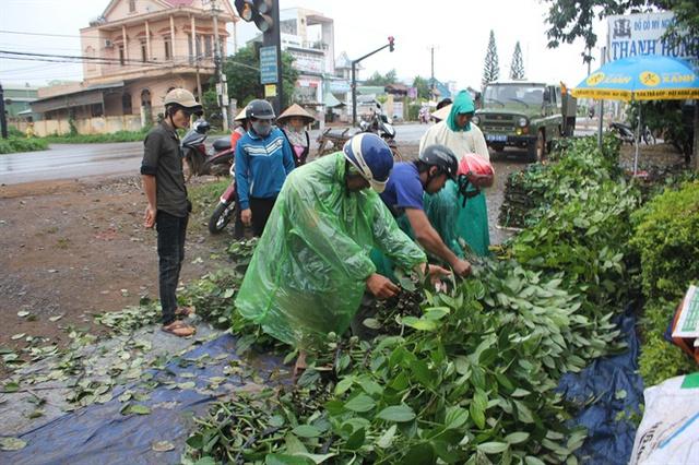 Một chợ di động bán cây giống hồ tiêu