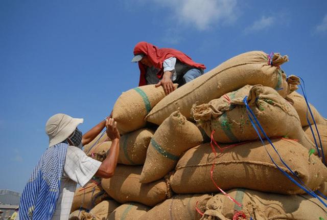 Dù đã cải thiện nhưng doanh nghiệp vẫn than phiền về điều kiện kinh doanh xuất khẩu gạoẢnh: NGỌC TRINH