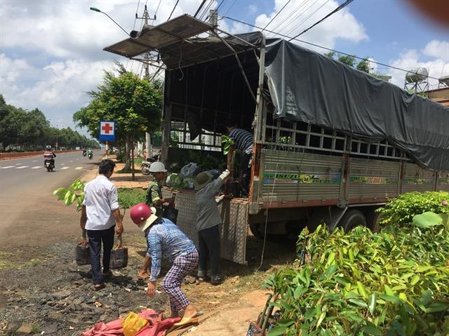 Tại các cơ sở kinh doanh cây giống ở xã Hòa Thắng, TP Buôn Ma Thuột luôn tấp nập kẻ mua, người bán