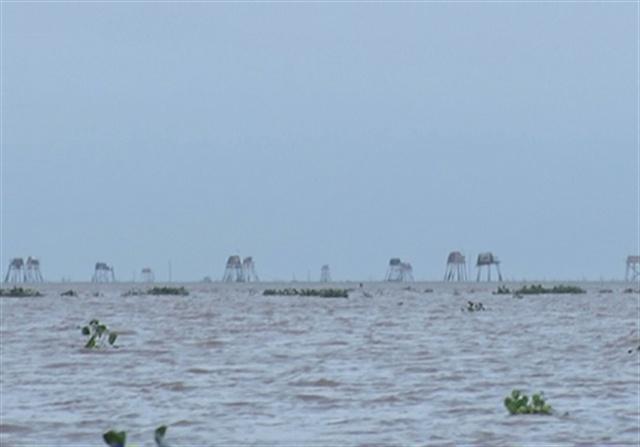 Ngư dân tự ý vây bãi nuôi ngao ở vùng biển xã Đại Hợp
