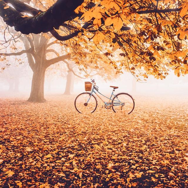 Mùa thu ở London, một chiếc xe đạp dựng trên tầng lá vàng úa.