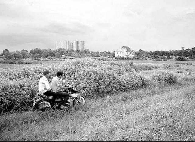 Một dự án treo hơn 20 năm ở huyện Bình Chánh (TP.HCM) khiến người dân khốn khổ vì đất bỏ hoang (Ảnh: Báo Tuổi Trẻ).