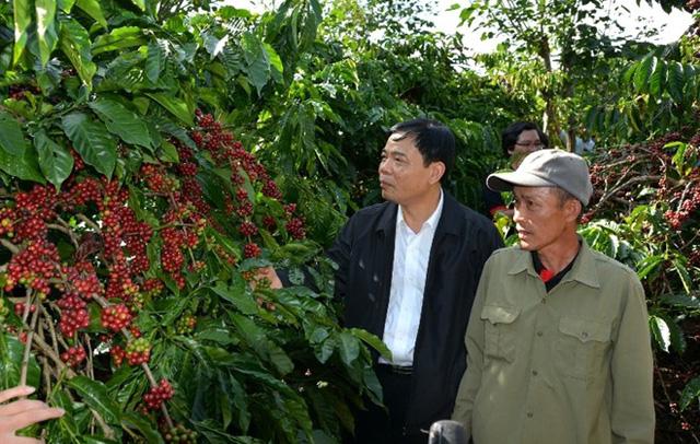 Ông Nguyễn Xuân Cường, Bộ trưởng Bộ NN&PTNT thăm vườn cà phê ở Lâm Đồng.