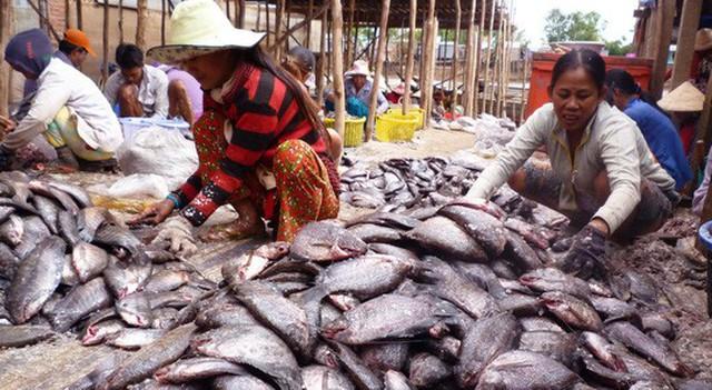 Chế biến khô cá sặc rằn cho dịp Tết Ảnh: THỐT NỐT