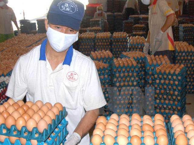 Dây chuyền sản xuất trứng sạch tại công ty Ba Huân. (Ảnh: Hoàng Hải/TTXVN)