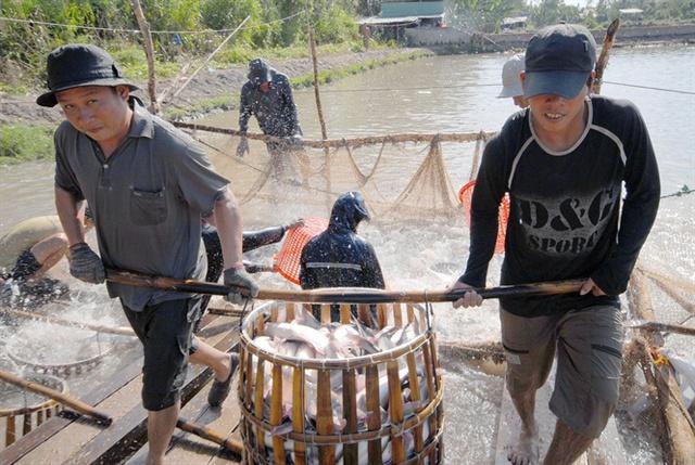 Ngành cá tra năm 2016 cán đích XK gần 1,7 tỷ USD