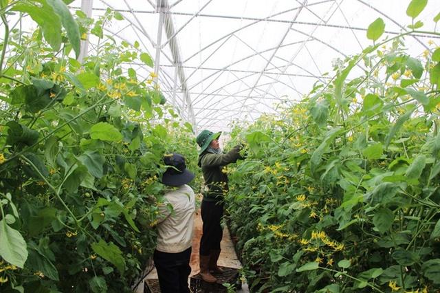Mỗi ngày Lâm Đồng cung cấp hơn 100 tấn rau, củ, quả các loại cho thị trường miền Trung