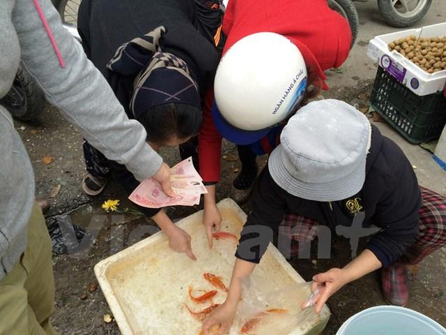 Cá chép đỏ hiếm và đắt nhưng người tiêu dùng vẫn tranh nhau mua trong ngày ông Công, ông Táo. (Ảnh: Thanh Tâm/Vietnam+)