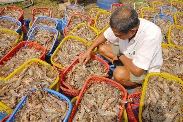 Bộ trưởng Bộ NN-PTNT Nguyễn Xuân Cường tin tưởng, ngành tôm sẽ đạt được đột phá dù không có sự đầu tư lớn về ngân sách