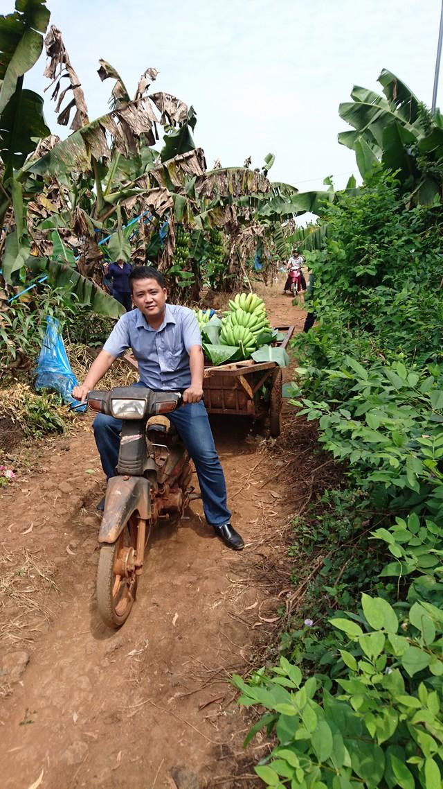Những buồng chuối sẽ Hội Liên hiệp Thanh niên Việt Nam tỉnh mua với giá 4000-5000 đồng/kg. (Ảnh Nguyễn Tuấn Khởi)