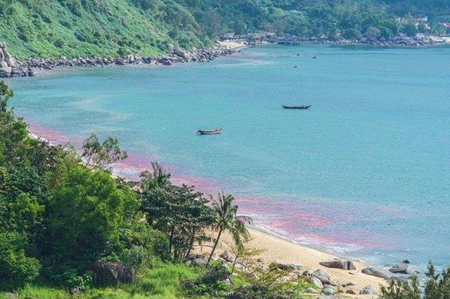 Hình ảnh chia sẻ trên mạng xã hội cho rằng, vệt nước đỏ xuất hiện tại biển Đà Nẵng
